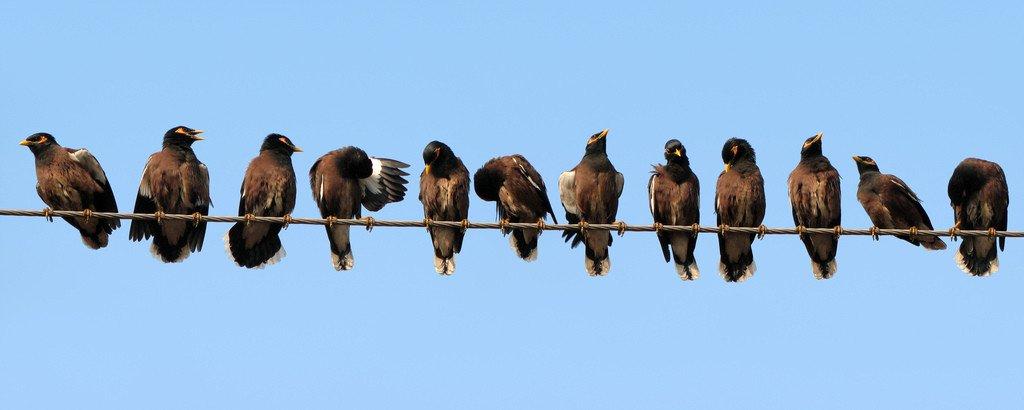 Pájaros encima de un cable telefónico