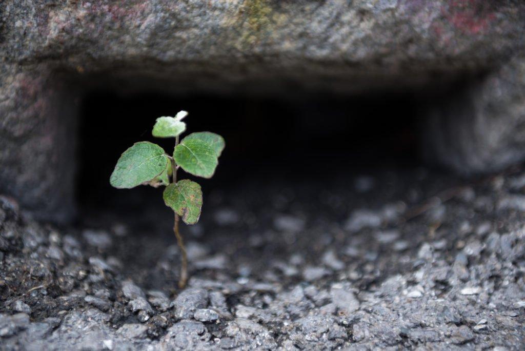 Brote de planta creciendo en asfalto